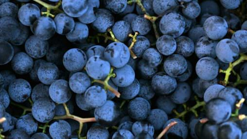 Concord Grape (CAP)