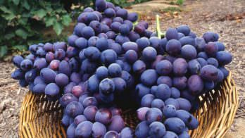 Grape (FW)