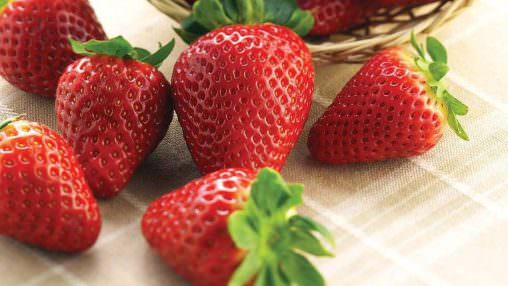 Strawberry (Red Touch, Fragola) (FA)