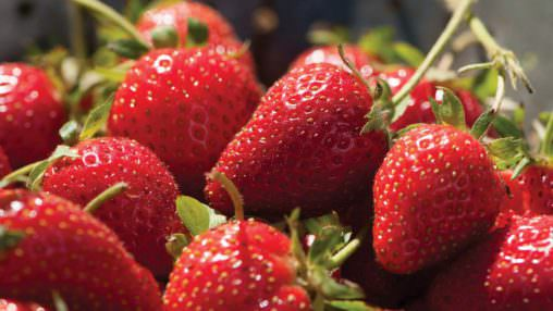 Strawberry (Natural) (FW)