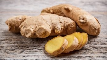 Ginger (PUR)