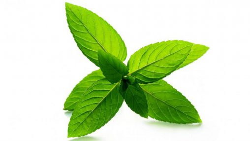 Peppermint (PUR)