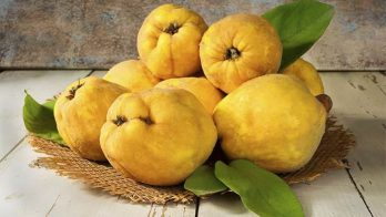 Quince (TPA)