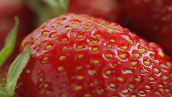 Sweet Strawberry (PUR)